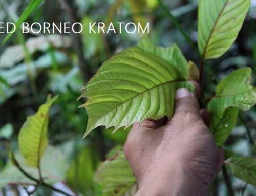 Red Borneo Kratom Review 2020: Pro's & Con's